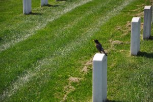 Bird on a Stone in Arlington